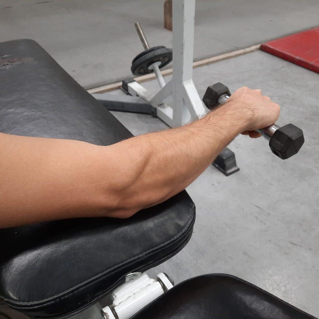 Musculatura agonista - antagonista 2